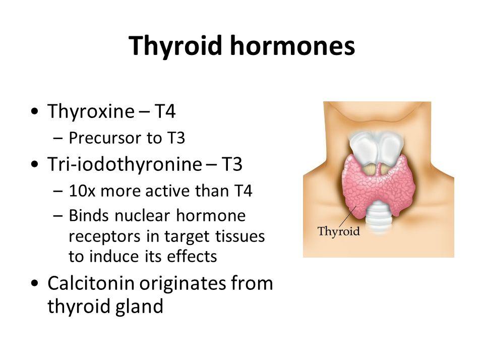 Thyroid hormones Thyroxine – T4 Tri-iodothyronine – T3
