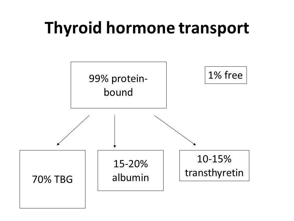 Thyroid hormone transport
