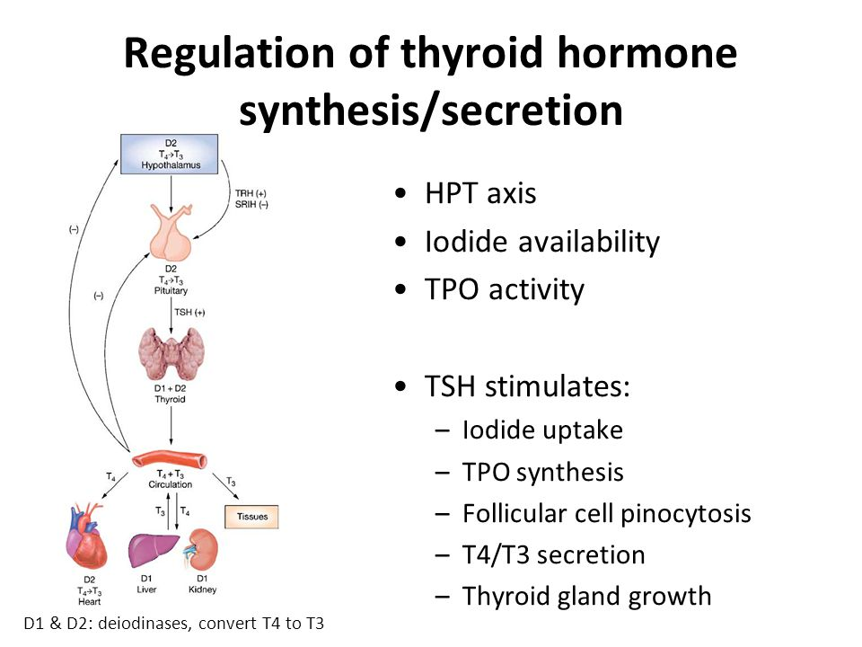 Regulation of thyroid hormone synthesis/secretion