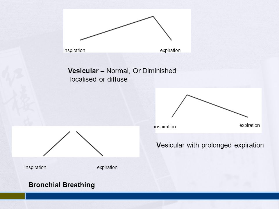 Vesicular – Normal, Or Diminished localised or diffuse