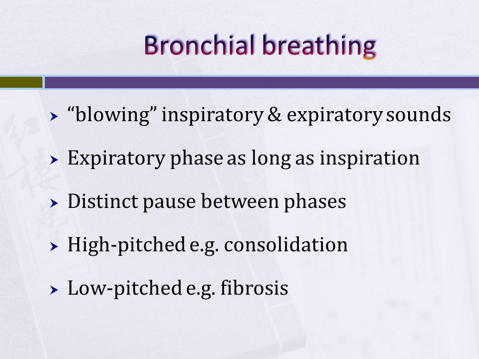 Bronchial breathing blowing inspiratory & expiratory sounds
