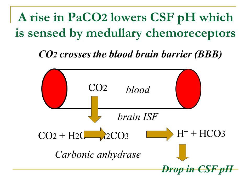 CO2 crosses the blood brain barrier (BBB)