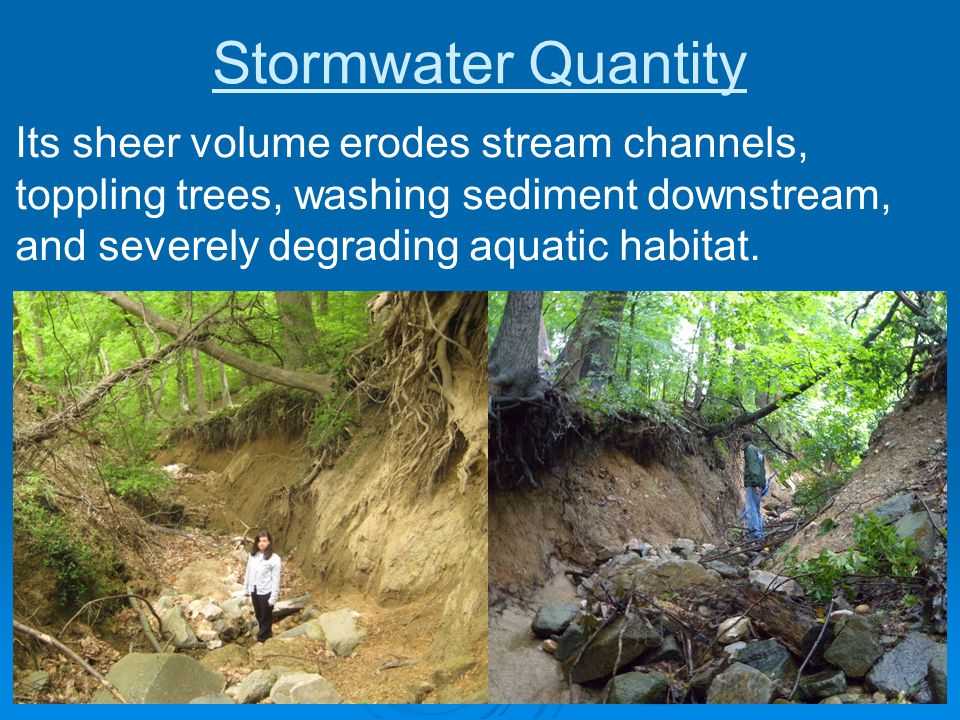 Stormwater Quantity Its sheer volume erodes stream channels, toppling trees, washing sediment downstream, and severely degrading aquatic habitat.