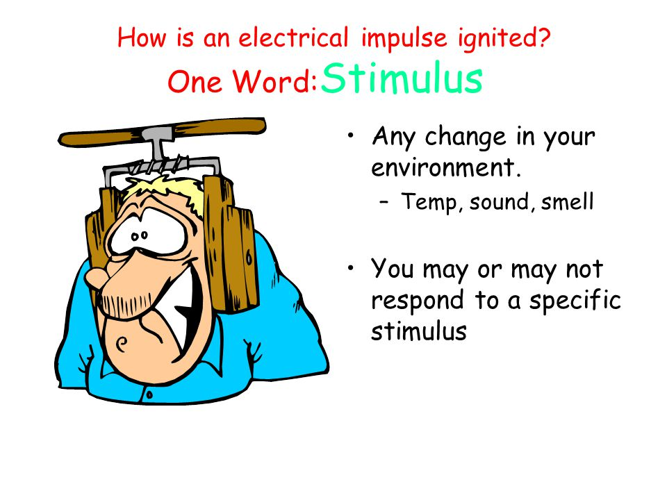 How is an electrical impulse ignited One Word:Stimulus