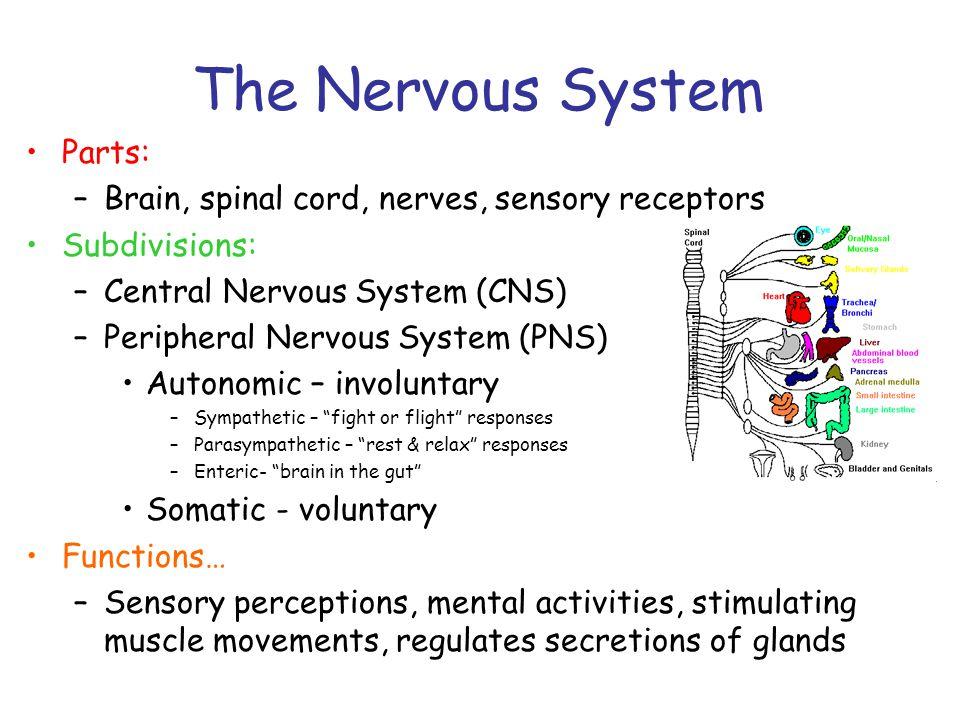The Nervous System Parts: