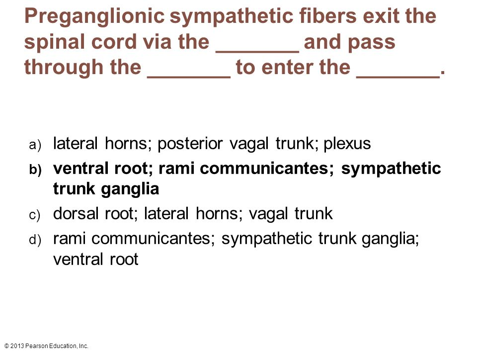 Preganglionic sympathetic fibers exit the spinal cord via the _______ and pass through the _______ to enter the _______.