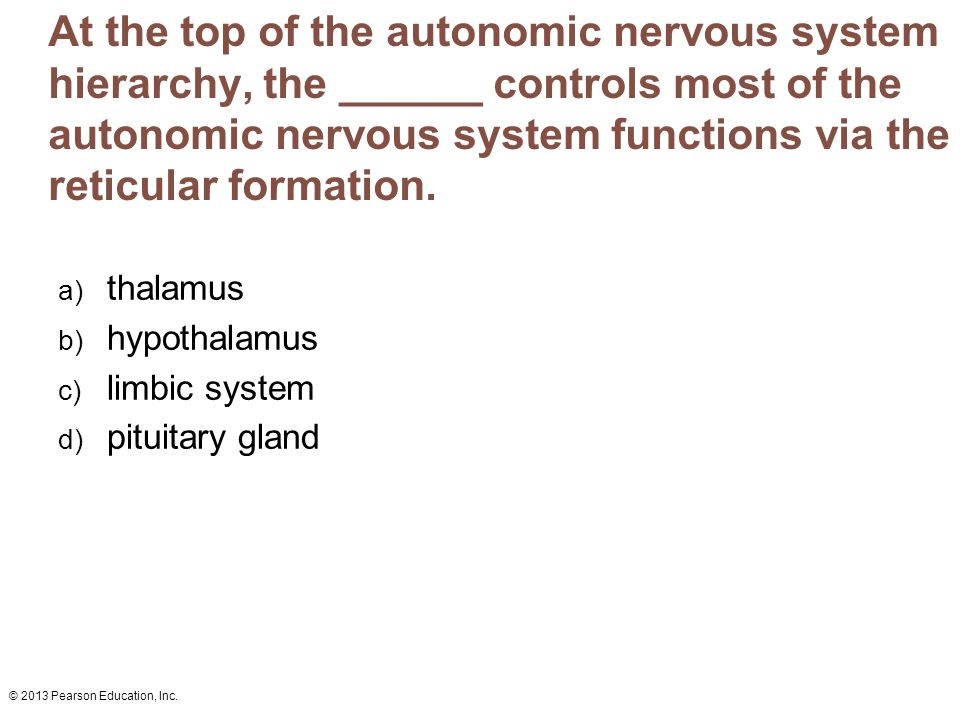 At the top of the autonomic nervous system hierarchy, the ______ controls most of the autonomic nervous system functions via the reticular formation.