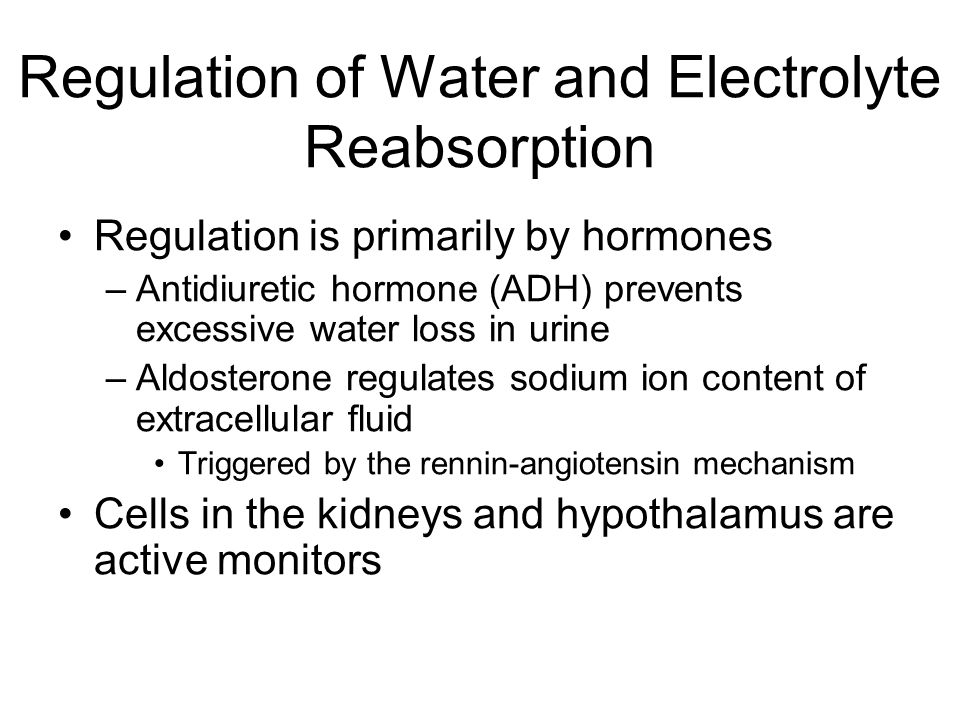 Regulation of Water and Electrolyte Reabsorption