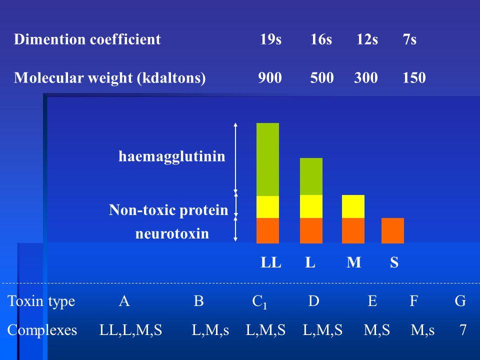 Dimention coefficient 19s 16s 12s 7s