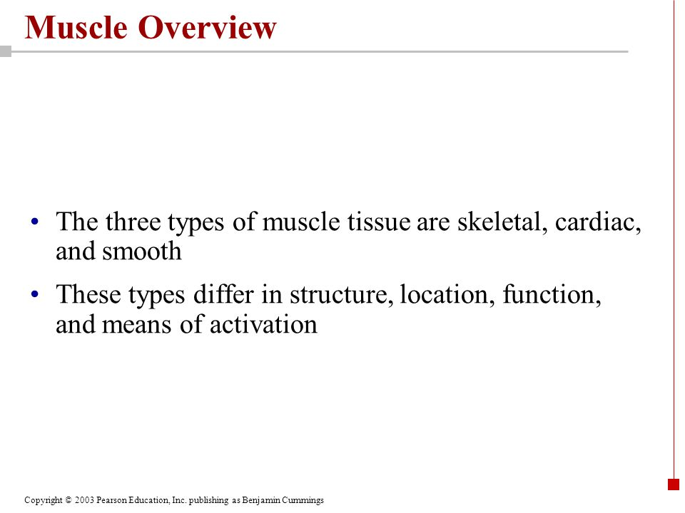 Muscle Overview The three types of muscle tissue are skeletal, cardiac, and smooth.