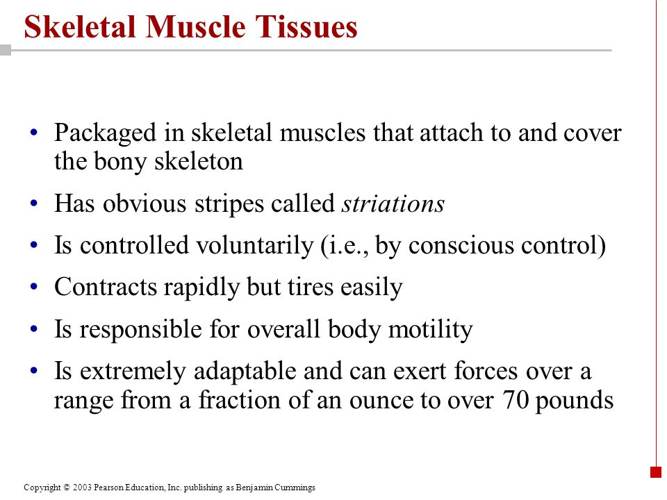 Skeletal Muscle Tissues