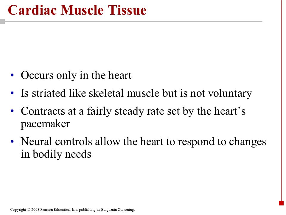 Cardiac Muscle Tissue Occurs only in the heart