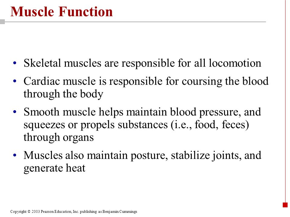 Muscle Function Skeletal muscles are responsible for all locomotion