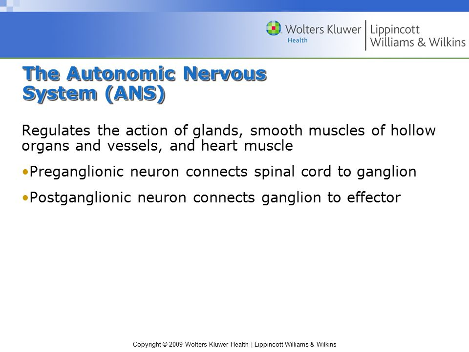 The Autonomic Nervous System (ANS)