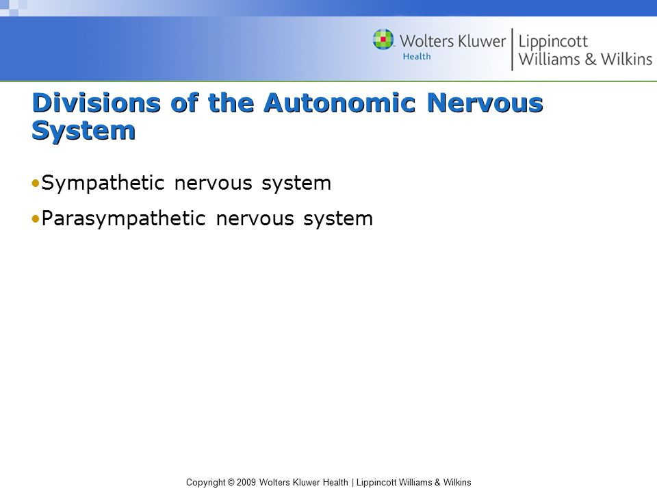 Divisions of the Autonomic Nervous System