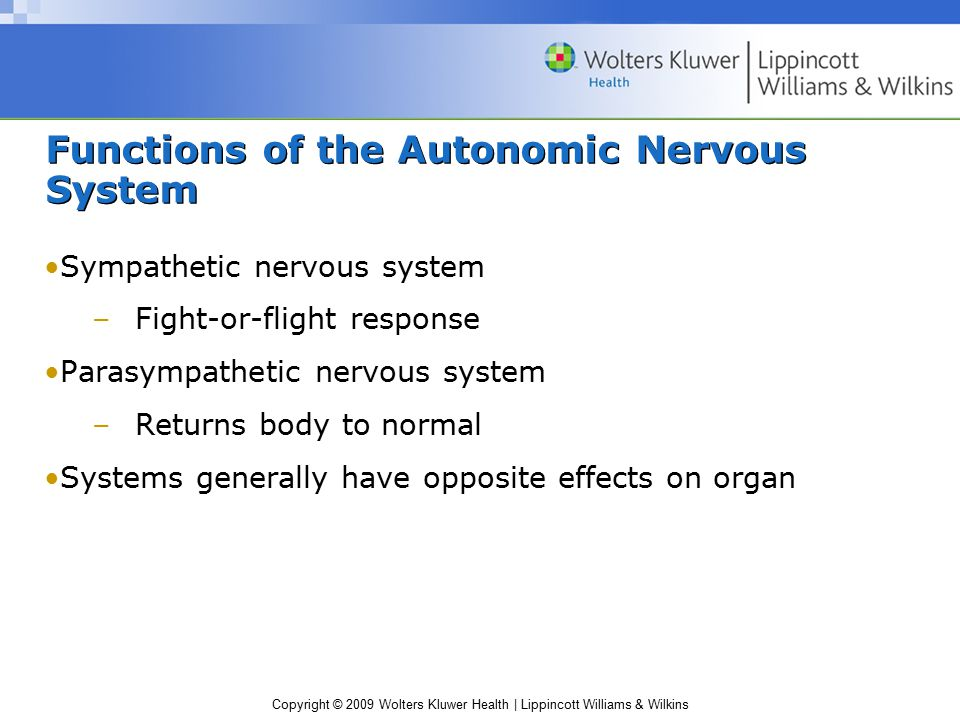 Functions of the Autonomic Nervous System