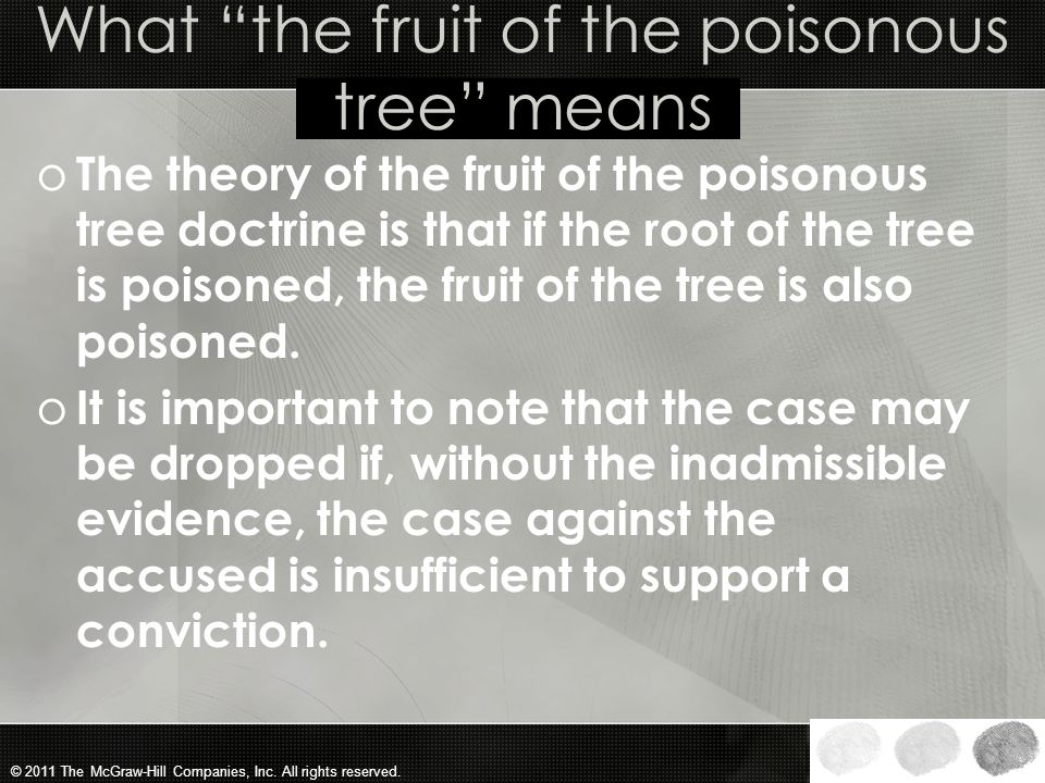 What the fruit of the poisonous tree means