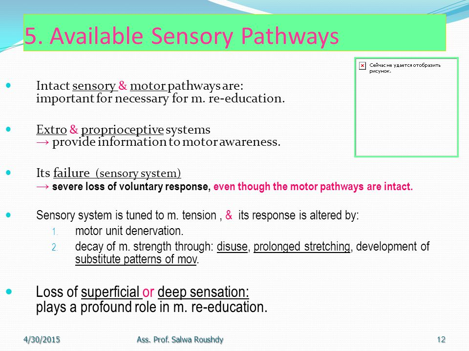 5. Available Sensory Pathways