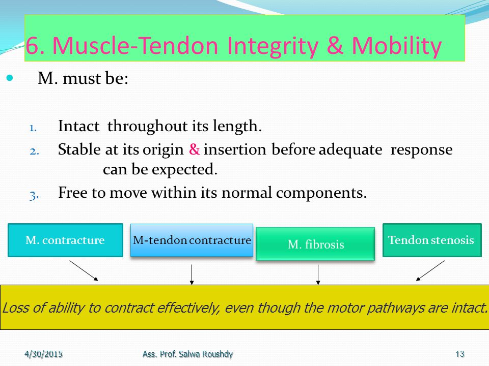 6. Muscle-Tendon Integrity & Mobility