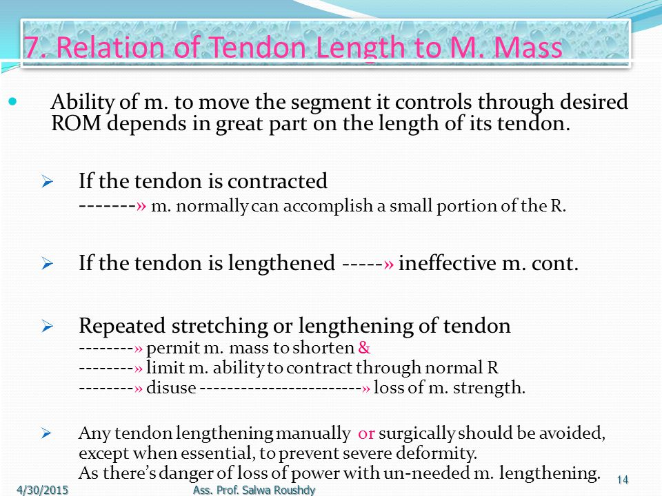 7. Relation of Tendon Length to M. Mass