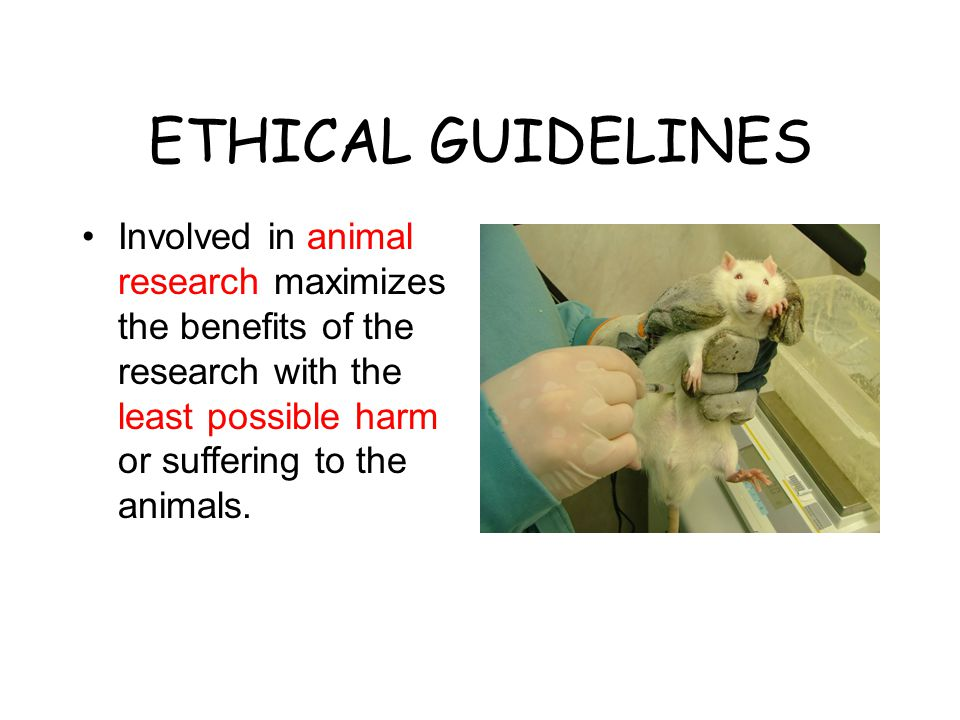 ETHICAL GUIDELINES Involved in animal research maximizes the benefits of the research with the least possible harm or suffering to the animals.