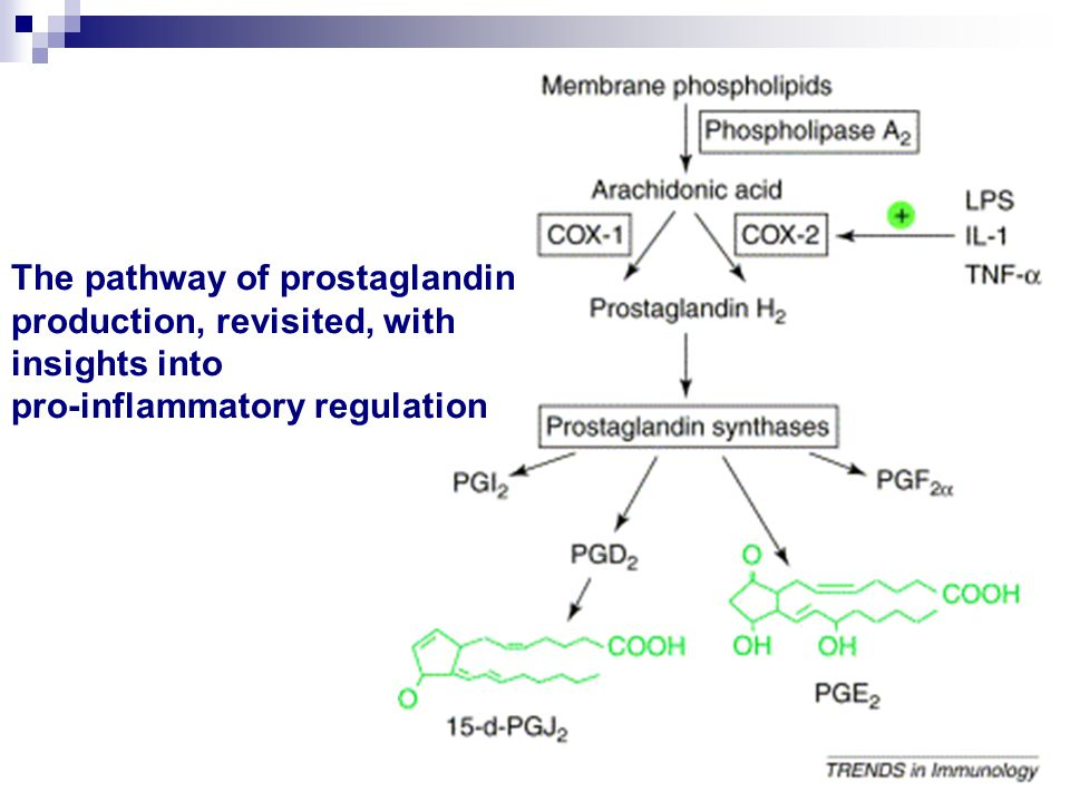 The pathway of prostaglandin