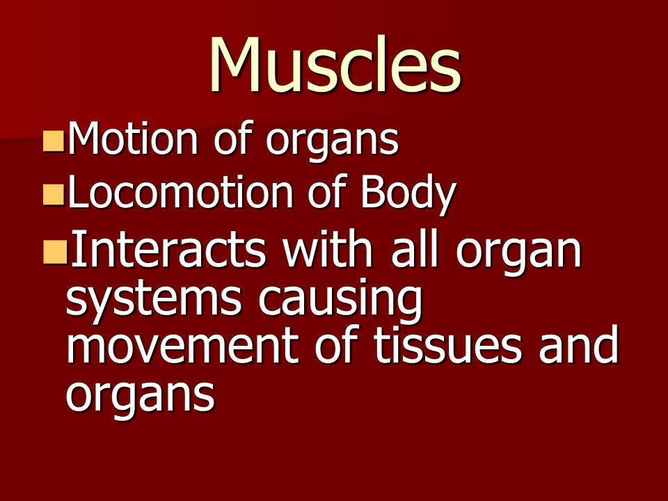 Muscles Motion of organs. Locomotion of Body.
