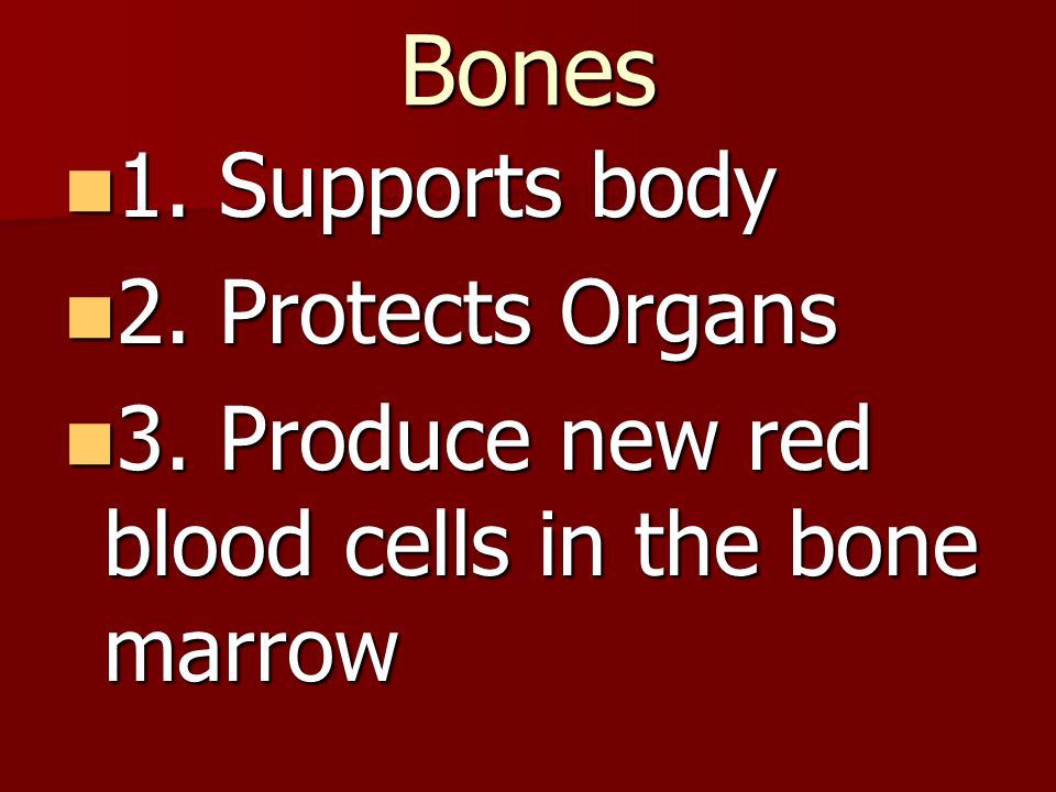 Bones 1. Supports body 2. Protects Organs