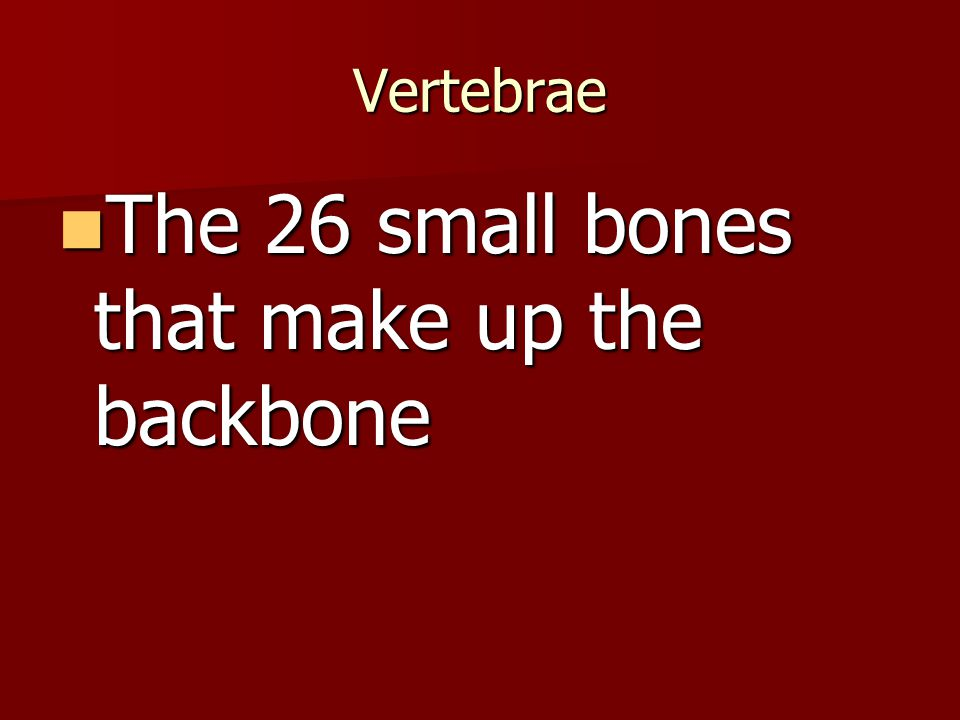 The 26 small bones that make up the backbone
