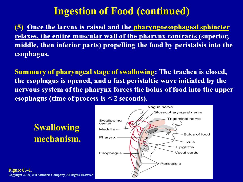 Ingestion of Food (continued)