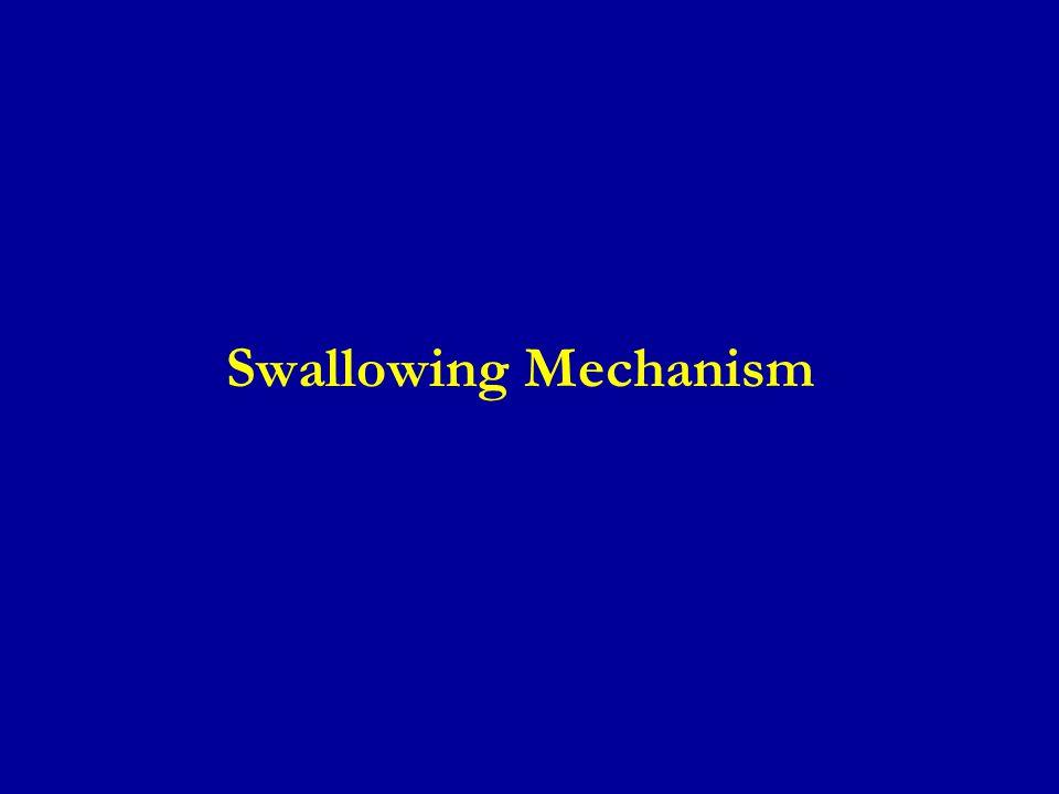 Swallowing Mechanism