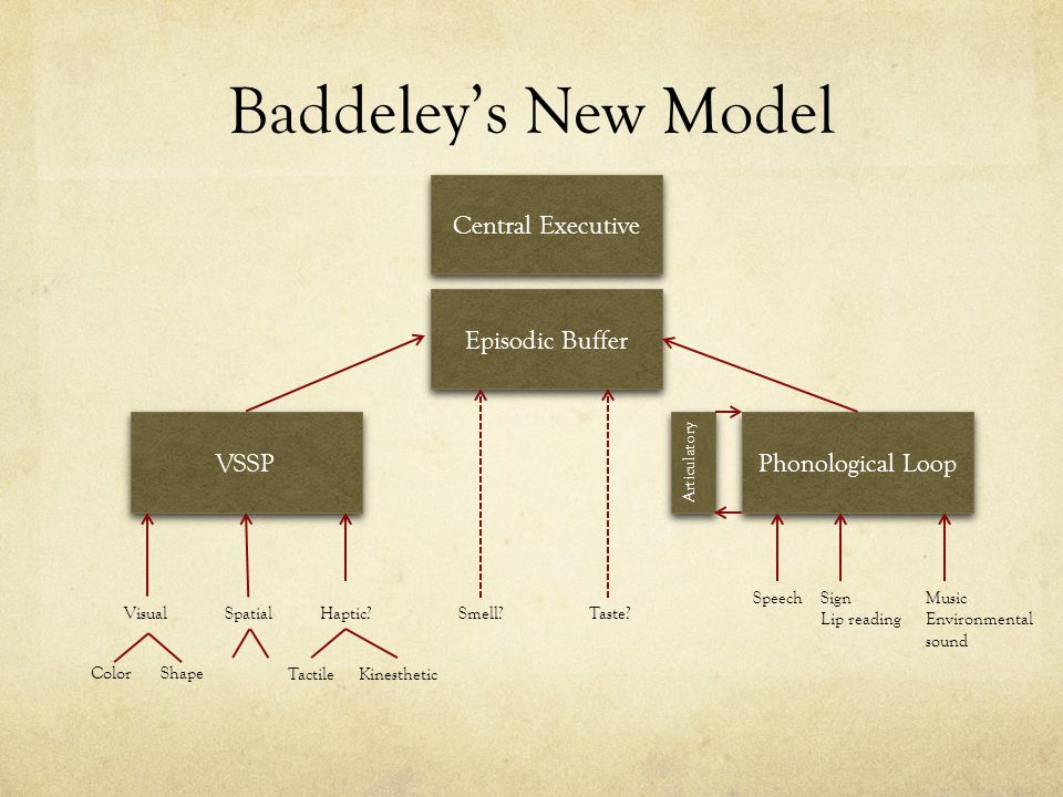 Baddeley's New Model Central Executive Episodic Buffer VSSP