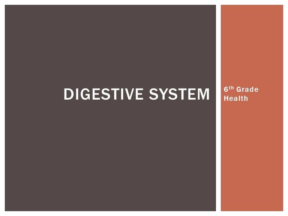 Digestive system 6th Grade Health