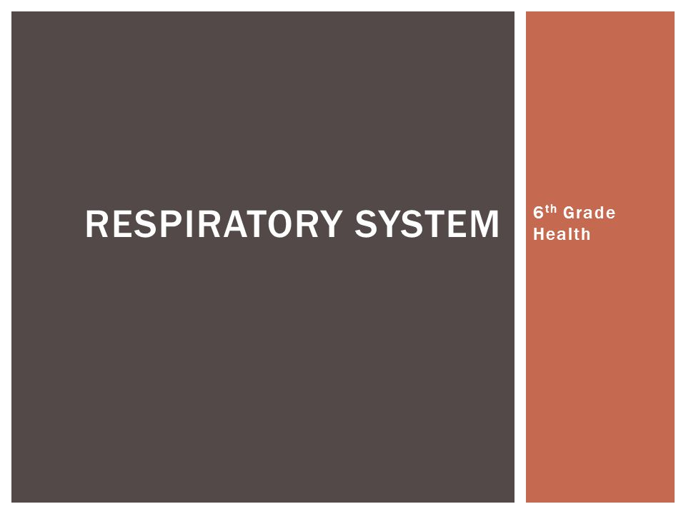 Respiratory system 6th Grade Health