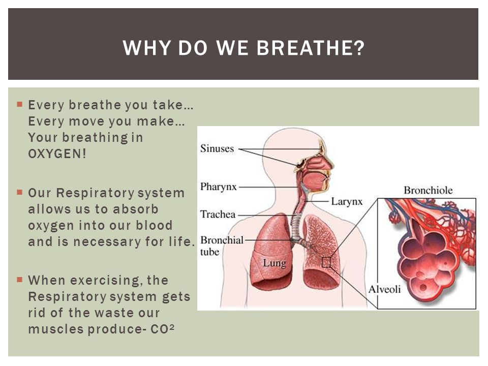 Why do we breathe Every breathe you take… Every move you make… Your breathing in OXYGEN!