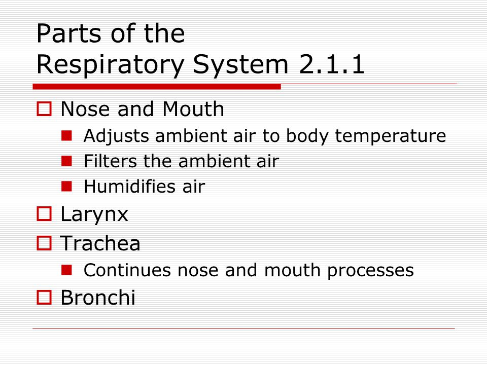 Parts of the Respiratory System 2.1.1