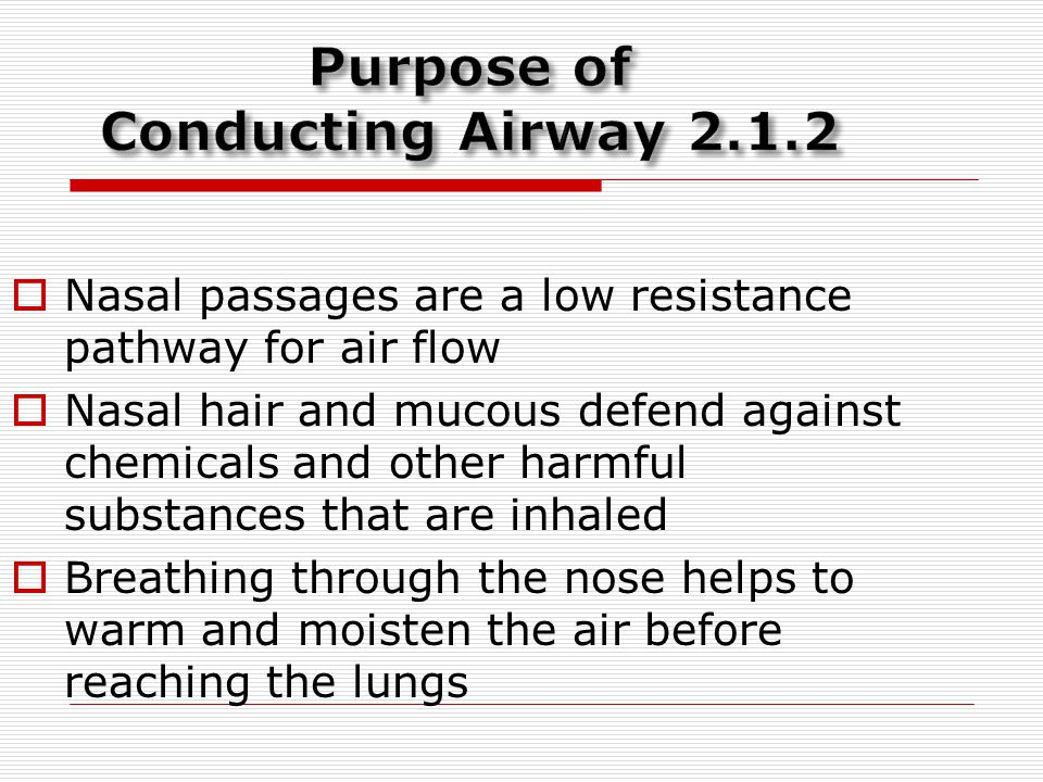 Purpose of Conducting Airway 2.1.2