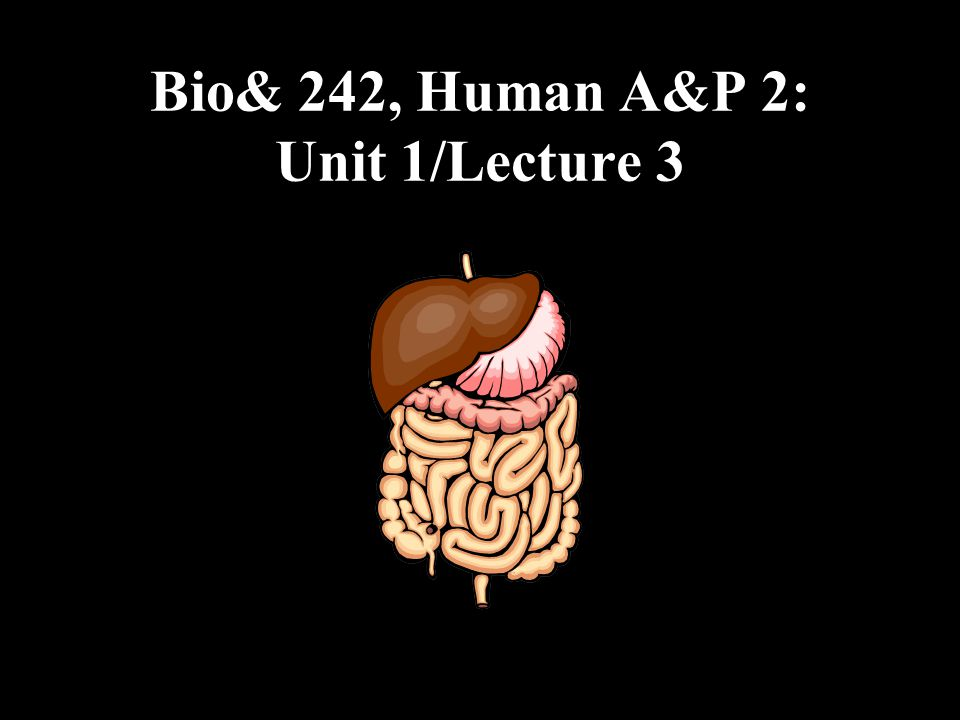 bio 242 Biol& 242 - human anatomy and physiology ii 60 credits second in a two- quarter sequence (241,242) the structure and function of the endocrine,.