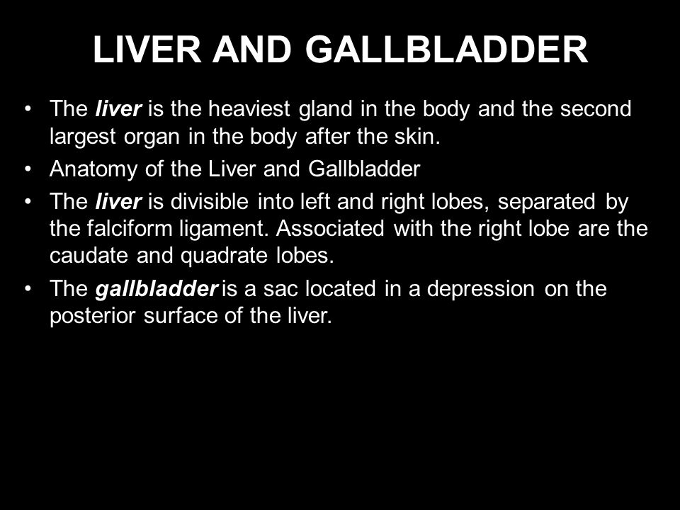LIVER AND GALLBLADDER The liver is the heaviest gland in the body and the second largest organ in the body after the skin.