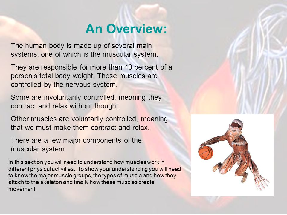 An Overview: The human body is made up of several main systems, one of which is the muscular system.