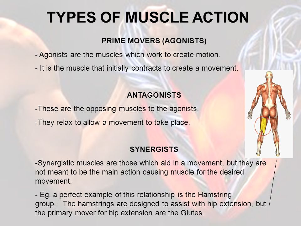 PRIME MOVERS (AGONISTS)