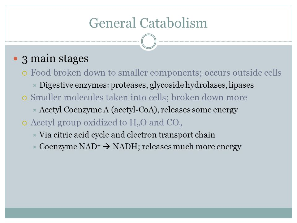 General Catabolism 3 main stages