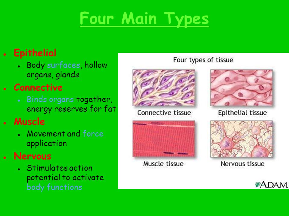Protection, Filtration, Secretion, Absorption, and Excretion
