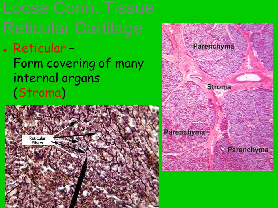 Blood Clotting (platelets) Immunity (WBC's) Nutrient delivery