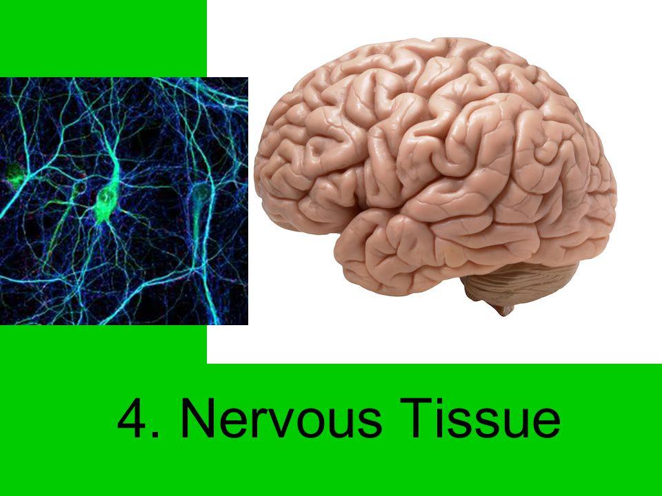 Axon Dendrite Nucleus Consists of Neuron and Neuroglia