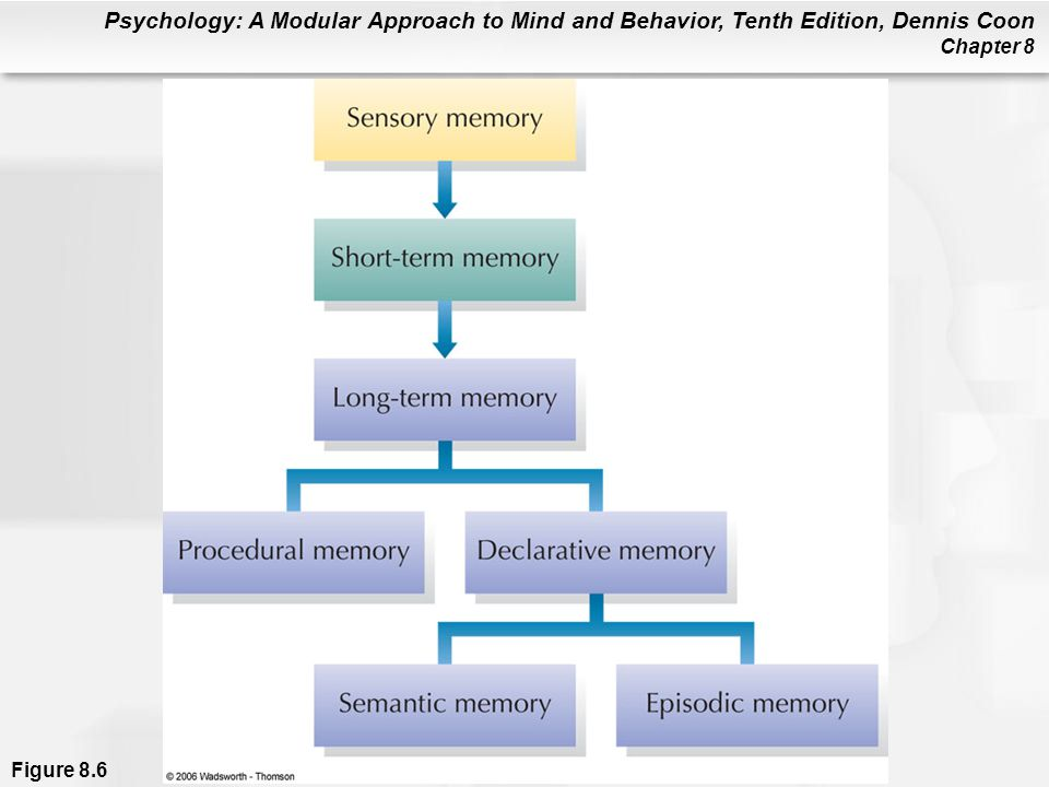 Figure 8.6 In the model shown here, long-term memory is divided into procedural memory (learned actions and skills) and declarative memory (stored facts). Declarative memories can be either semantic (impersonal knowledge) or episodic (personal experiences associated with specific times and places).