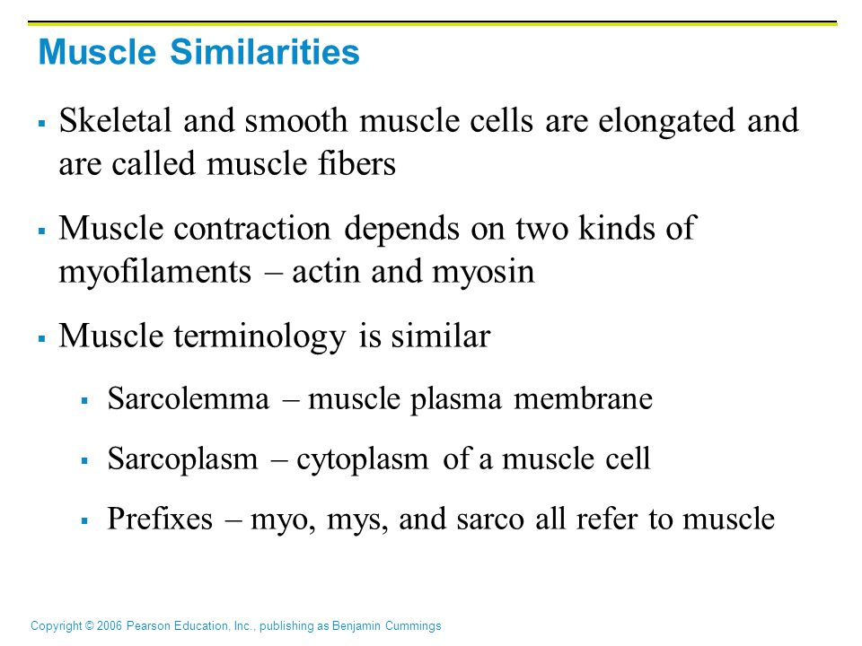 Muscle terminology is similar