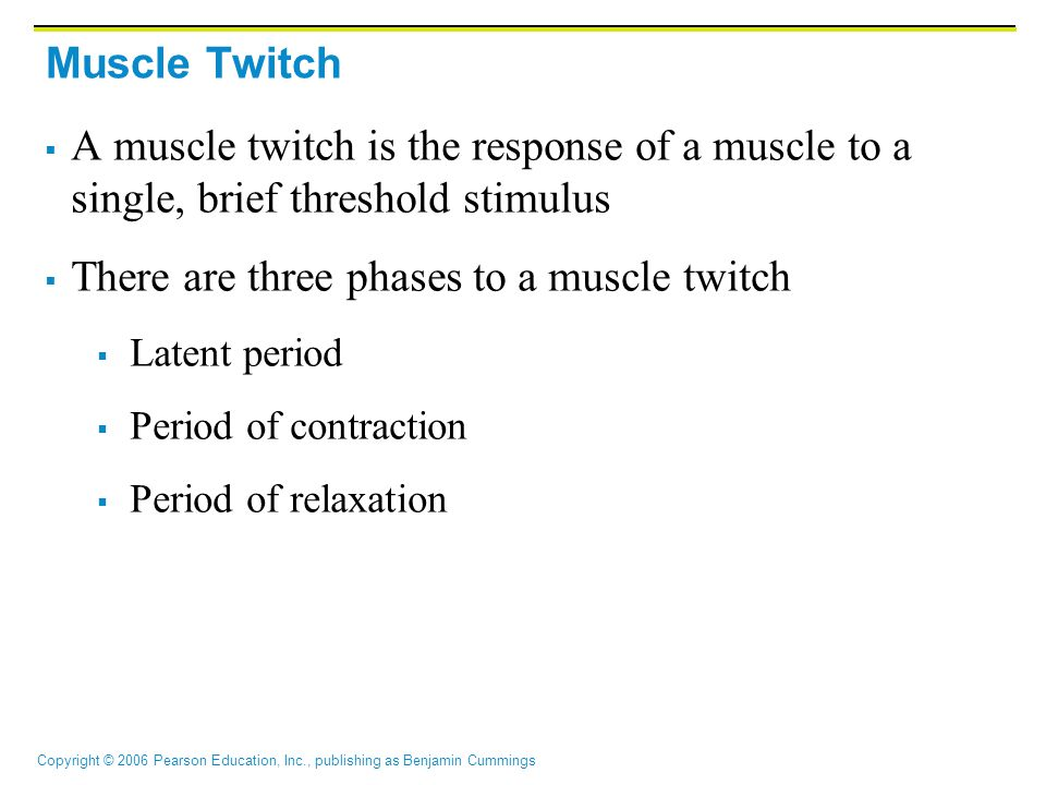 There are three phases to a muscle twitch