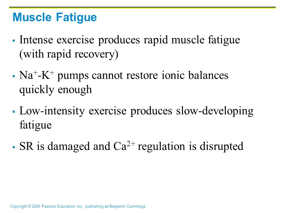 Muscle Fatigue Intense exercise produces rapid muscle fatigue (with rapid recovery) Na+-K+ pumps cannot restore ionic balances quickly enough.