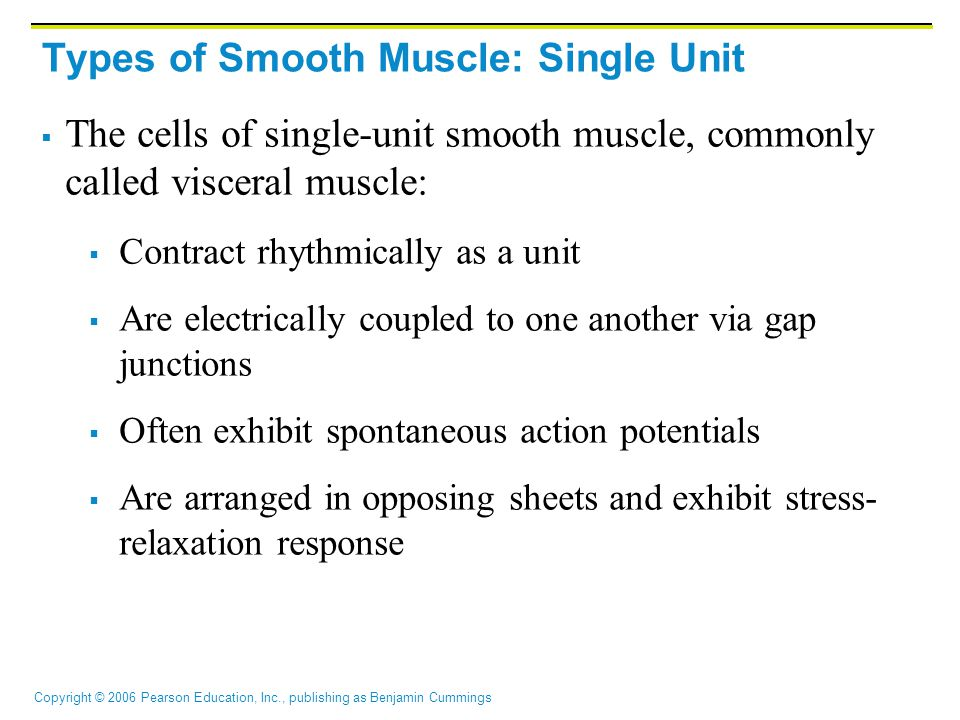 Types of Smooth Muscle: Single Unit